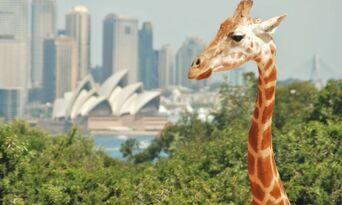 Taronga Zoo Entry and Harbour Ferry Pass with Sky Safari Thumbnail 3