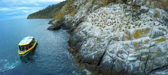 Iron Pot Scenic Cruise from Hobart Thumbnail 1