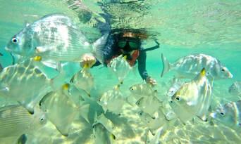 Gold Coast Kayaking and Snorkelling Tour to Wavebreak Island Thumbnail 5