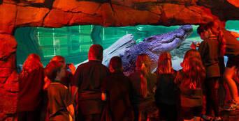 Melbourne Hop on Hop off Tour & Melbourne Aquarium Thumbnail 1