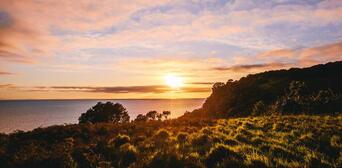 Tiritiri Matangi Island Guided Day Tour from Auckland Thumbnail 2