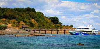 Tiritiri Matangi Island Guided Day Tour from Auckland Thumbnail 1
