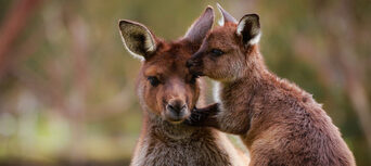 Ballarat Wildlife Park Tickets Thumbnail 2