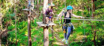 TreeTop Challenge at Currumbin Wildlife Sanctuary Thumbnail 2