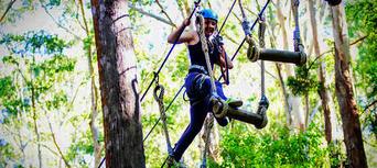 TreeTop Challenge at Currumbin Wildlife Sanctuary Thumbnail 5