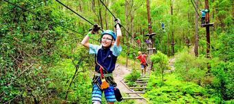 TreeTop Challenge at Currumbin Wildlife Sanctuary Thumbnail 1