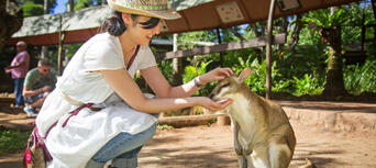 Kuranda Coach Tour with Rainforestation Nature Park Entry Thumbnail 4