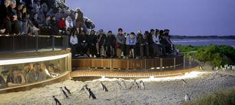 Phillip Island Nature Parks Penguin Parade Entry Thumbnail 3