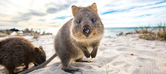 Rottnest Island Day Tour including Bike and Snorkel Hire from Perth Thumbnail 2