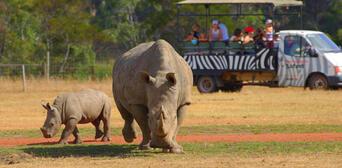 Werribee Open Range Zoo Deluxe Safari Adventure Thumbnail 2