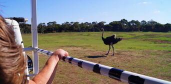 Werribee Open Range Zoo Deluxe Safari Adventure Thumbnail 3