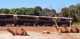 Werribee Open Range Zoo Deluxe Safari Adventure Thumbnail 4