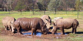 Werribee Open Range Zoo Deluxe Safari Adventure Thumbnail 5