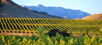 Marlborough Winery Tour - Full Day Thumbnail 3