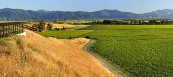 Marlborough Winery Tour - Half Day Thumbnail 6