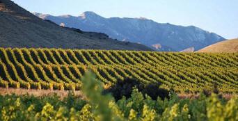 Marlborough Winery Tour - Half Day Thumbnail 1