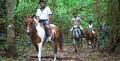 Cairns Horse Riding Tour - 10.45am Thumbnail 1