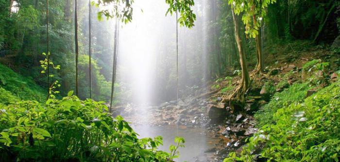 Free Things To Do  Dorrigo National Park