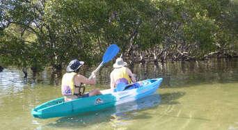 Brunswick River Nature Kayak Tour Thumbnail 1