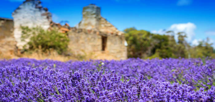 Free Things To Do  Port Arthur Lavender