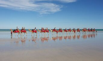 Cable Beach Morning Camel Ride Thumbnail 1