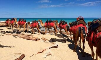 Morning Cable Beach Camel Ride Thumbnail 2