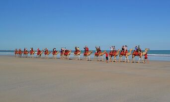 Cable Beach Morning Camel Ride Thumbnail 4