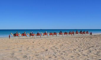 Cable Beach Morning Camel Ride Thumbnail 6
