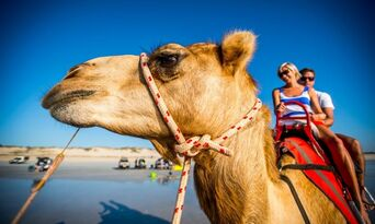 Cable Beach Pre Sunset Sampler Camel Ride Thumbnail 4