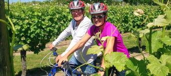 Full Day Standard Guided Biking Wine Tour Thumbnail 5