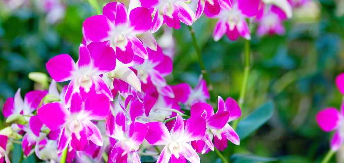 Free Things To Do  Hervey Bay Botanic Gardens