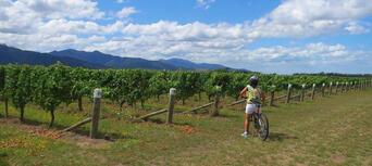 Half Day Guided Biking Wine Tour Thumbnail 2