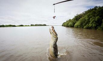Adelaide River Jumping Crocodile Cruise Thumbnail 2