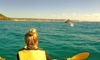 Rainbow Beach Dolphin Kayak & 4WD Beach Drive Adventure Thumbnail 1