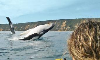 Rainbow Beach Dolphin Kayak & 4WD Beach Drive Adventure Thumbnail 6