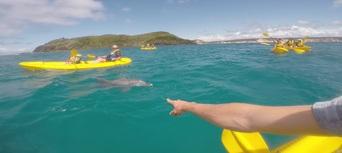 Rainbow Beach Dolphin Kayak and 4WD Beach Drive Adventure Thumbnail 1