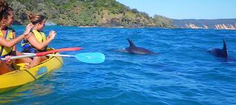 Rainbow Beach Dolphin Kayak and 4WD Beach Drive Adventure Thumbnail 2