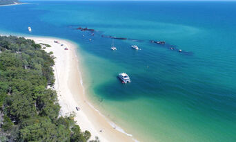 Moreton Island Dolphin Spotting and Snorkelling Cruise departing from Redcliffe Thumbnail 1