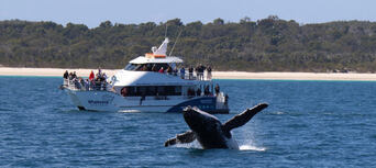 Extended Morning or Afternoon + Sunset Whale Watch Cruise Thumbnail 1