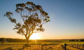 Luxury Carbon Neutral Hunter Valley Wine-Tasting Departing Sydney Thumbnail 4