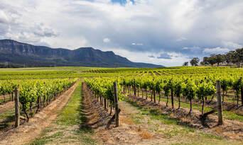 Luxury Carbon Neutral Hunter Valley Wine-Tasting Departing Sydney Thumbnail 5