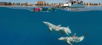 Adelaide Swim with Wild Dolphins Cruise Thumbnail 3