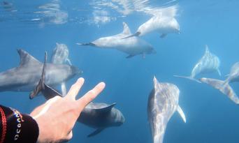 Adelaide Swim with Wild Dolphins Cruise Thumbnail 1
