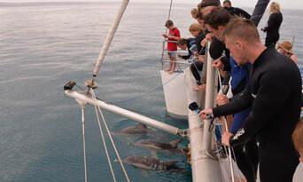 Adelaide Swim with Wild Dolphins Cruise Thumbnail 4