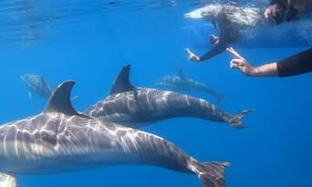 Adelaide Swim with Wild Dolphins Cruise Thumbnail 3