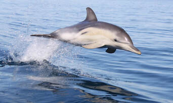 Adelaide Swim with Wild Dolphins Cruise Thumbnail 5