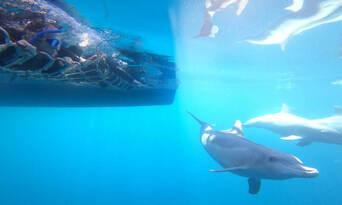 Adelaide Swim with Wild Dolphins Cruise Thumbnail 6