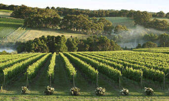 Mornington Peninsula Gourmet Tour from Melbourne Thumbnail 2