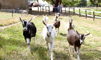Mornington Peninsula Gourmet Tour from Melbourne Thumbnail 6