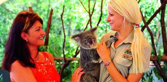 Hartleys Crocodile Adventures Breakfast with Koalas Thumbnail 2
